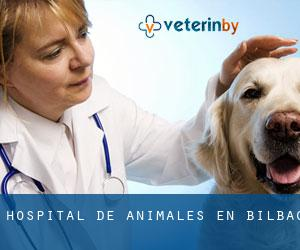 Hospital de animales en Bilbao
