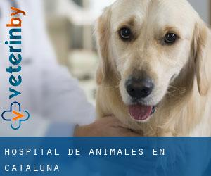 Hospital de animales en Cataluña