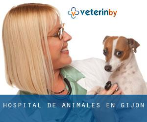 Hospital de animales en Gijón
