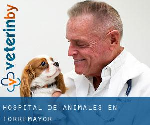 Hospital de animales en Torremayor