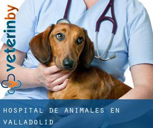 Hospital de animales en Valladolid