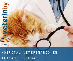 Hospital veterinario en Alicante (Ciudad)