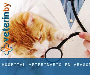 Hospital veterinario en Aragón