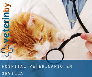 Hospital veterinario en Sevilla