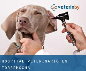 Hospital veterinario en Torremocha