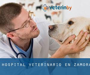 Hospital veterinario en Zamora