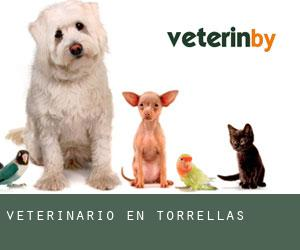Veterinario en Torrellas