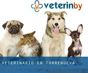 Veterinario en Torrenueva